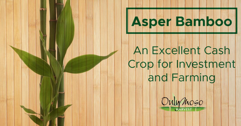 About Asper Bamboo Onlymosousa