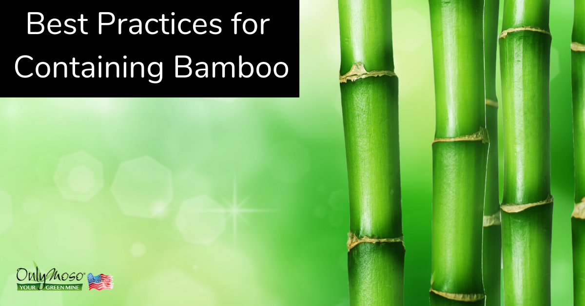 How to contain commercial bamboo