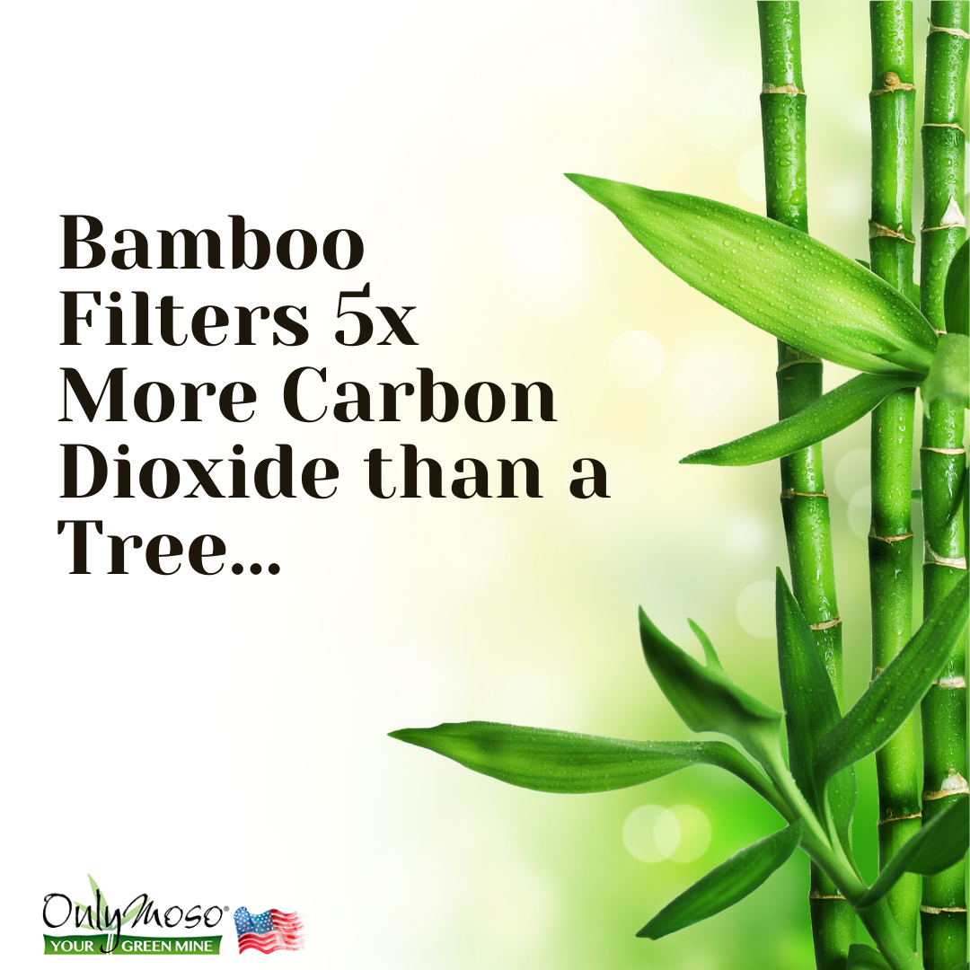 Benefits of Commercial Bamboo